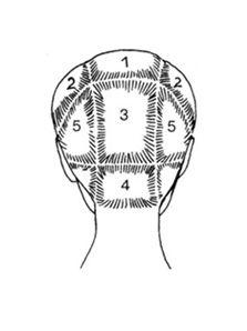 Разделите волосы на зоны